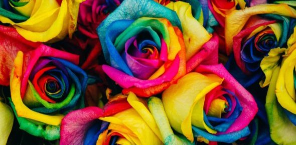 A close up of a bunch of rainbow-colored roses with yellow, pink, red, blue and turquoise petals.