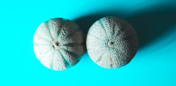 Closeup of two grey melons sitting on a bright blue surface